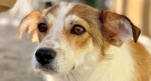 pawsitive animal rescue